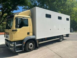 грузовик коневоз MAN Pferdetransporter